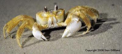 crab_4405