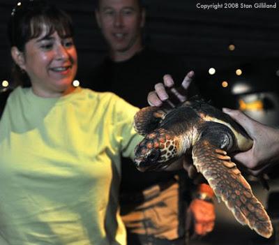 turtle_4283